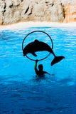 Delphin-Erscheinen Stockfoto
