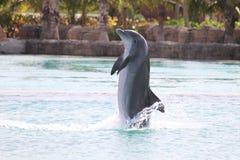 Delphin-Erscheinen Atlantis Bahamas lizenzfreie stockfotografie