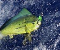Delphin-Fische lizenzfreie stockfotos