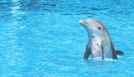 Delphin glücklich auf Meer Stockbild