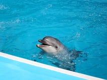 Delphin im Pool lizenzfreies stockfoto