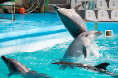 Delphin im Pool-Play Stockbilder