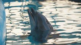 Delphin im Pool stock video