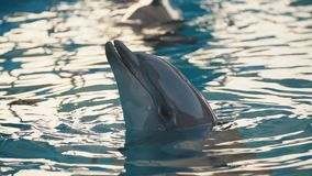 Delphin im Pool stock video footage