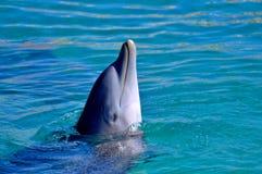 Delphin im Wasser Stockbild