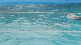 Delphin ist Schwimmen im Regen stock footage