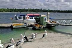 Delphin-Kreuzfahrt Stockbild