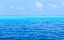 Delphin Malediven stockfotografie