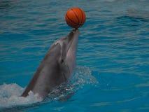 Delphin mit einer Kugel Lizenzfreie Stockfotos