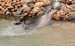 Delphin mit einer Weltkugel stockbilder