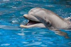 Delphin mit geöffnetem Mund lizenzfreies stockbild