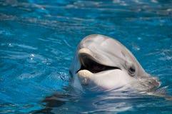 Delphin mit geöffnetem Mund lizenzfreie stockfotos