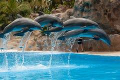 Delphin springen lizenzfreie stockbilder