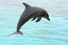 Delphin springen Lizenzfreies Stockfoto
