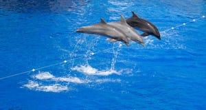 Delphin springen vom Wasser im Swimmingpool heraus Lizenzfreie Stockfotografie