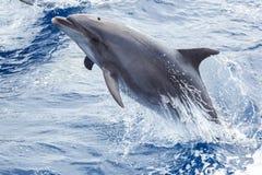 Delphin springt vom Wasser heraus Lizenzfreie Stockfotografie