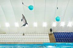 Delphin springt zum Ball Lizenzfreie Stockfotografie