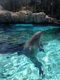 Delphin-Sprung Stockfoto