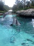 Delphin-Sprung Lizenzfreie Stockfotografie