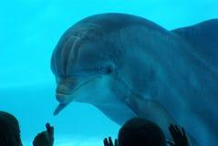 Delphin-Uhr Stockbild