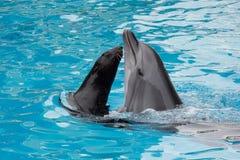 Delphin- und Pelzrobbe schwimmen im Pool lizenzfreies stockfoto