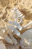 Delphin- und Walknochen auf dem Wüstenstrand von Namibe angola Lizenzfreie Stockfotos