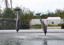Delphin während des Zeigunges in Miami Stockfotos