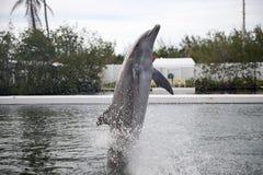 Delphin während des Zeigunges in Miami Lizenzfreie Stockfotos