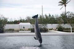 Delphin während des Zeigunges in Miami Stockfoto