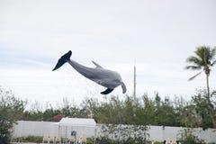 Delphin während des Zeigunges in Miami Lizenzfreie Stockbilder