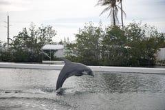 Delphin während des Zeigunges in Miami Stockbild