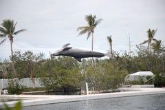 Delphin während des Zeigunges in Miami Lizenzfreies Stockfoto