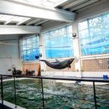 Delphinausführung Stockfoto