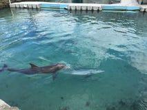 delphine stockbilder