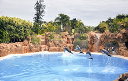 Delphine in der Luft. Lizenzfreies Stockfoto
