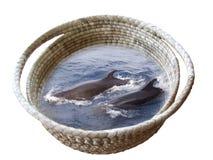 Delphine in einem Korb lizenzfreie stockbilder