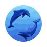 Delphine im runden Bereich Stockfotos