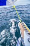 Delphine nähern sich Segeljacht Lizenzfreies Stockfoto