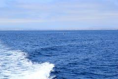 Delphine nahe Ventura-Küste, Kalifornien Stockfotos