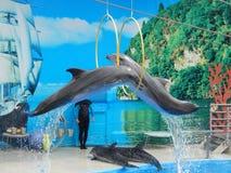 delphine stockbild