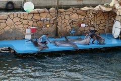 Delphine und Menschen lizenzfreies stockbild