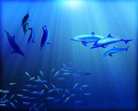 Delphine Unterwasser Stockfoto