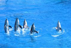 Delphine zeigen im Wasserpark Lizenzfreies Stockfoto