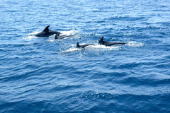 Delphinfamilie stockbild