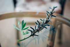 DELPHINIUM λουλούδι Στοκ εικόνα με δικαίωμα ελεύθερης χρήσης