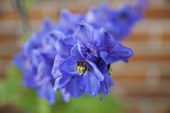 Delphinium. Beautiful delphinium in the garden stock images