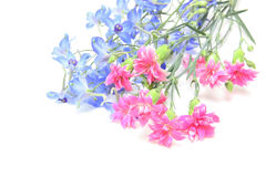 Delphinium and carnation in a white background Royalty Free Stock Images