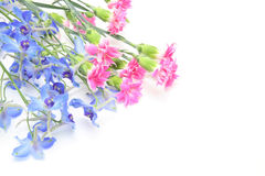Delphinium and carnation in a white background Stock Photos