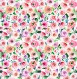 Delphinium coloré de mauve rose de wildflowers de beau beau ressort lumineux magnifique de fines herbes floral doux tendre Images stock