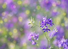 Delphinium flower Stock Photography